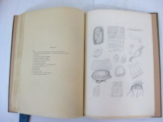 "THE OCEANIC HYDROZOA; A Description of the Calycophoridae and Physophoridae Observed During the Voyage of H.M.S. ""Rattlesnake,"" in the years 1846-1850. With a General Introduction."