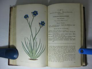 THE BOTANICAL MAGAZINE; or, FLOWER-GARDEN DISPLAYED: in which the most Ornamental Foreign Plants, cultivated in the Open Ground, the Green-House, and the Stove, are accurately represented in their natural Colours. (Volume 1)