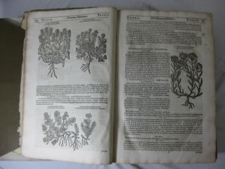 THEATRUM BOTANICUM, THE THEATRE OF PLANTS, or, an Herball of a Large Extent: Containing therein a more ample and exact History and declaration of the Physicall Herbs...